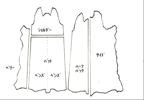 皮の部位の名称